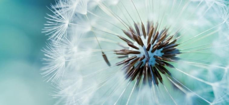 Investigación y Desarollo de Immunocal